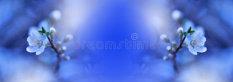 Van de de aardbloesem van de lente het Webbanner of kopbal Abstracte macrofoto Artistieke blauwe achtergrond Fantasieontwerp Kleu stock foto