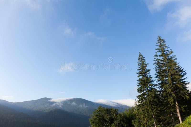 Van de de aardpijnboom van de Karpaten de bos, blauwe hemel en bergen Exemplaarruimte voor tekst stock afbeeldingen
