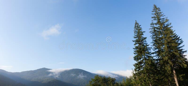 Van de de aardpijnboom van de Karpaten de bos, blauwe hemel en bergen Exemplaarruimte voor tekst stock afbeelding