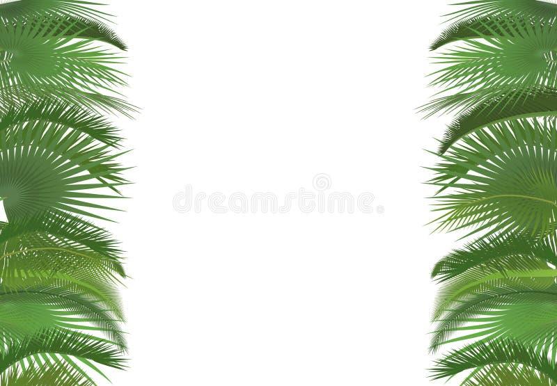 Van de achtergrond boombladeren van de palminstallatie malplaatje Exotische tropische de groetkaart van festivalselebration Het b stock illustratie