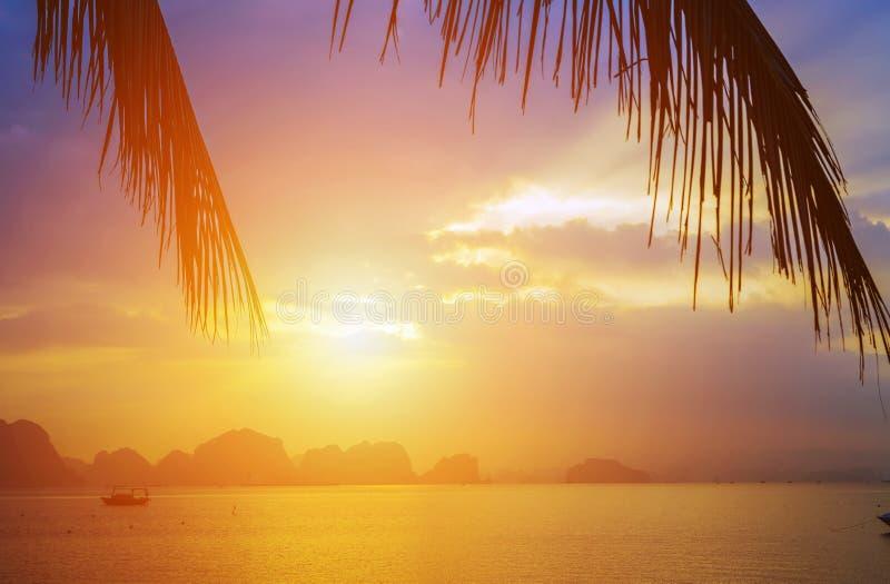 van de de avondhemel van het palmensilhouet de Achtergrond van de de wolkenzonsondergang Snakken de Hoogste Bestemmingen van Viet royalty-vrije stock fotografie