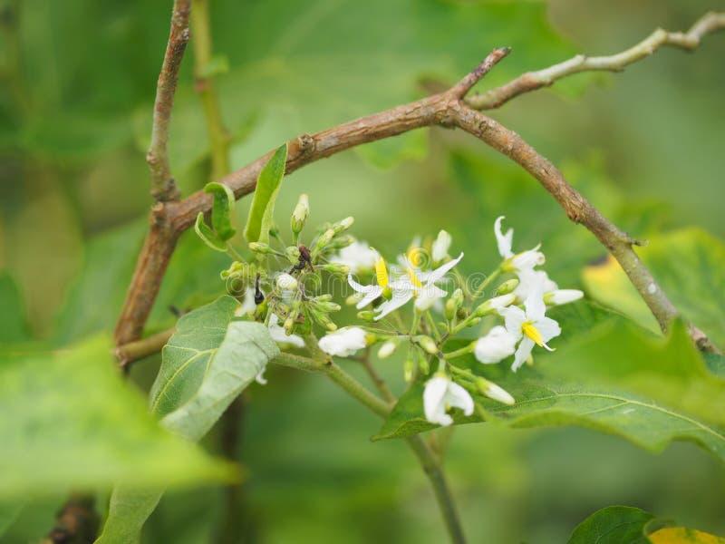 Van de de bessen plantaardige witte bloem van Turkije de aardachtergrond royalty-vrije stock foto's