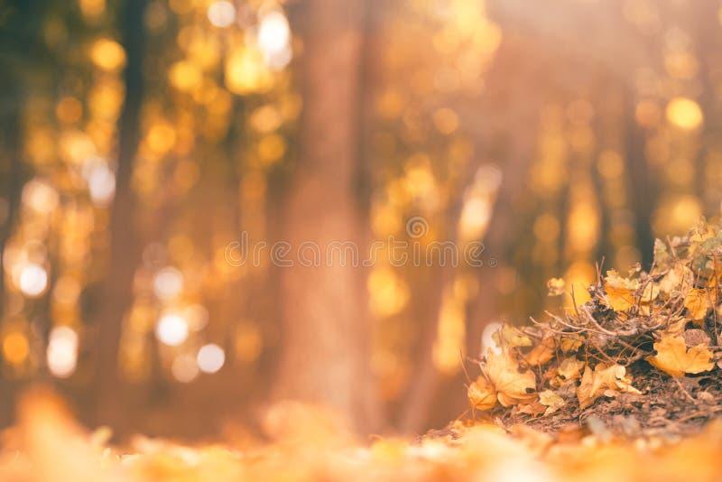 Van de de bladerenboom van de de herfst bosstapel de takkenachtergrond royalty-vrije stock foto's