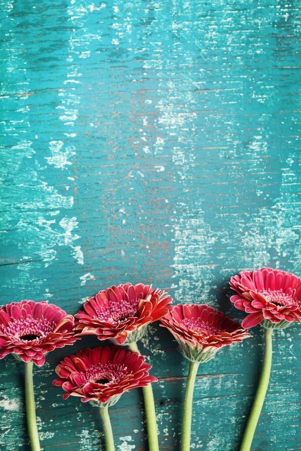 Van de de bloemgroet van het Gerberamadeliefje de kaartconcept Bloemengrens op uitstekende wintertalingsachtergrond Hoogste menin royalty-vrije stock afbeelding