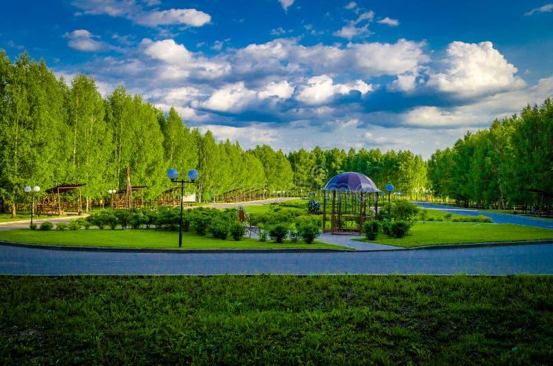 Van de bomenbossen van schoonheidsbergen allen van de de aardzon u vereisen voor geluk royalty-vrije stock foto