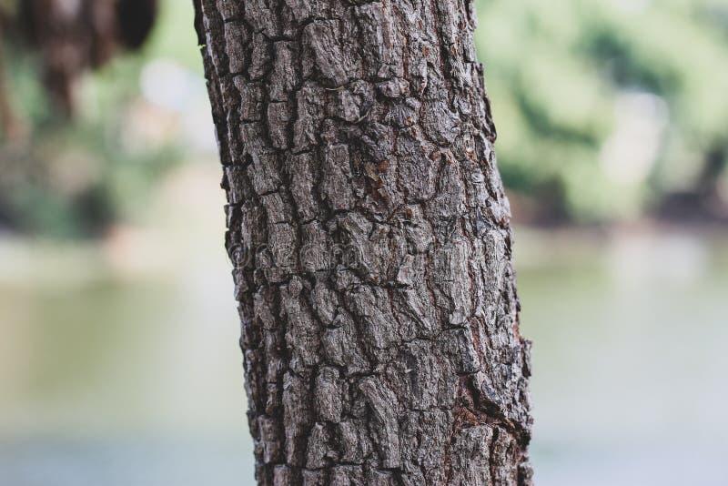 Van de boomboomstam en schors textuur, patroon natuurlijk detail royalty-vrije stock fotografie