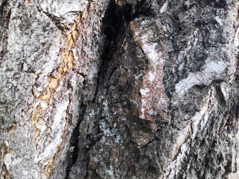Van de boomschors oude mooie structurele bruine grijze aard als achtergrond royalty-vrije stock afbeeldingen