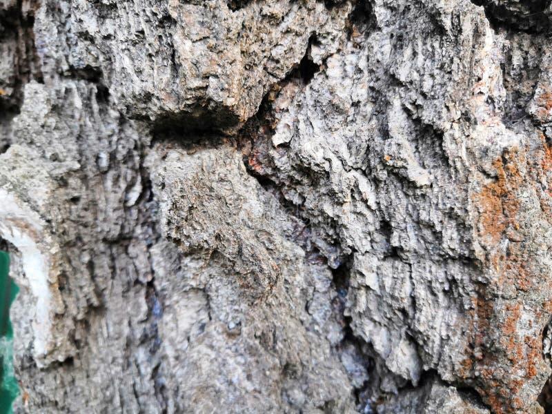 Van de boomschors oude mooie structurele bruine grijze aard als achtergrond stock fotografie