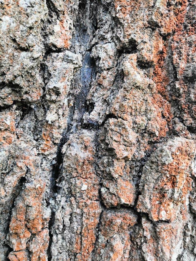 Van de boomschors oude mooie structurele bruine grijze aard als achtergrond stock afbeeldingen