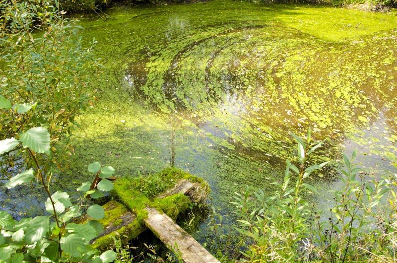 Van de de bloeivijver van Agal de bos groene water gebroken brug stock foto