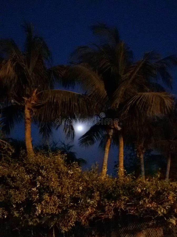 Van de de bomennacht van de volle maan lichte avond van de scènedatetree de installaties bluesky darksky stock foto