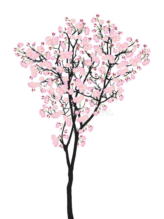 Van de de boomkers van volledige bloei roze sakura de bloesem zwart die hout op wit, treetop bloem wordt geïsoleerd royalty-vrije illustratie