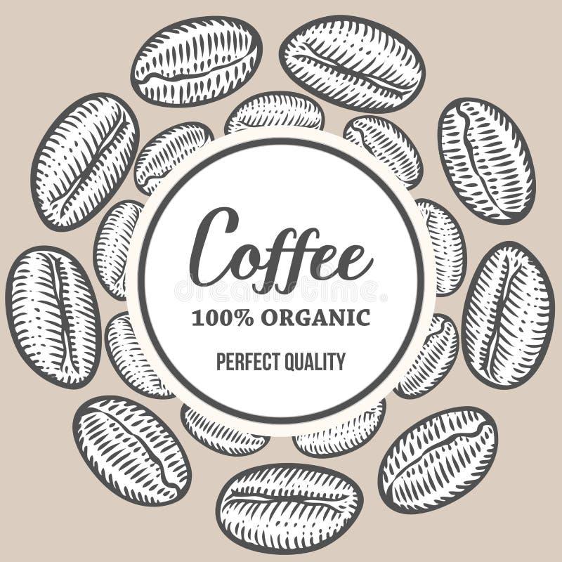 Van de de Handhand getrokken plantkunde van koffiebonen vector de bannerillustratie stock foto's