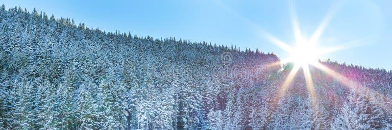 Van de de pijnboomboom van de sneeuwwinter panorama en de zon het bos royalty-vrije stock foto