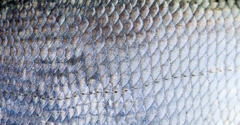 Van de de schalen geweven huid van brasemvissen het patroon macromening Selectieve nadruk, ondiep dieptegebied stock foto's