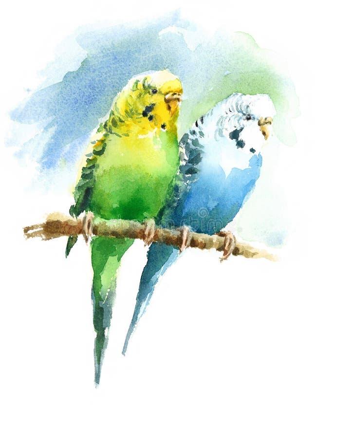 Van de de Waterverf de Exotische Vogel van twee Grasparkietparkieten Getrokken Hand van de de Liefdeillustratie royalty-vrije illustratie