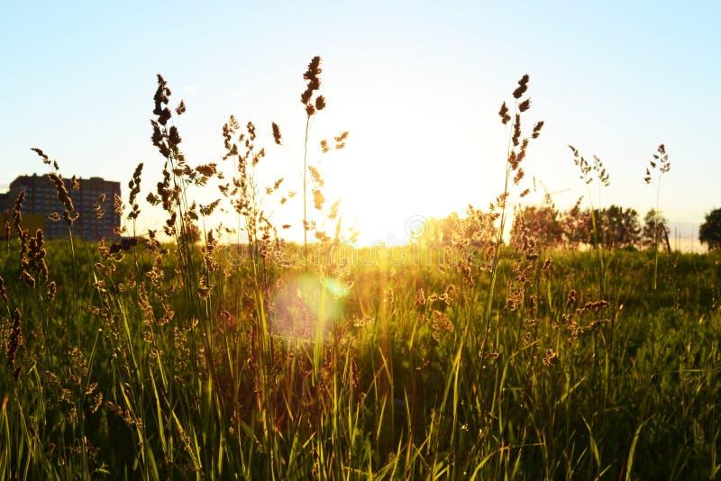 Van de de zonsondergangstad van de grashemel van de het gebiedstapkraan van de landschappen de boswolken van de het groenserenite royalty-vrije stock foto