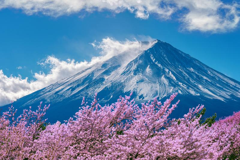 Van de Fujiberg en kers bloesems in de lente, Japan stock foto