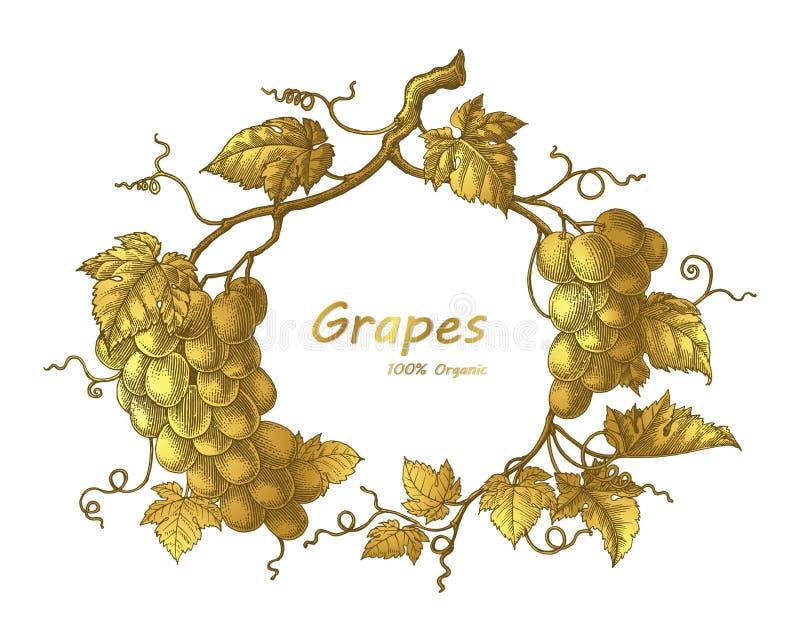 Van de de handtekening van het druivenkader gaat de uitstekende de gravureillustratie met vector illustratie