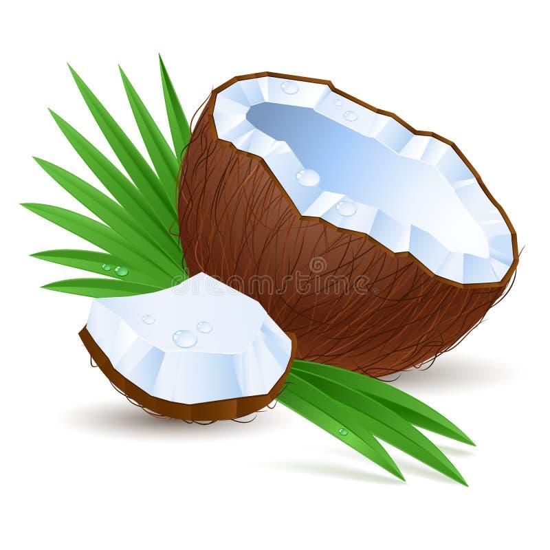 Van de helft van kokosnoot stock illustratie