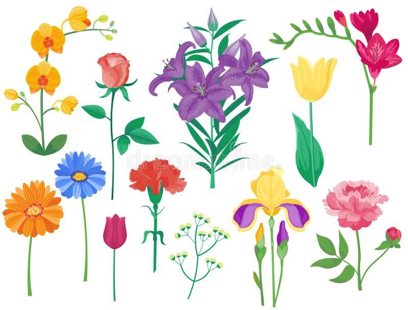 Van de het boekettuin van het beeldverhaalbloemblaadje de uitstekende bloemen vector van de bloem botanische natuurlijke pioenen  vector illustratie