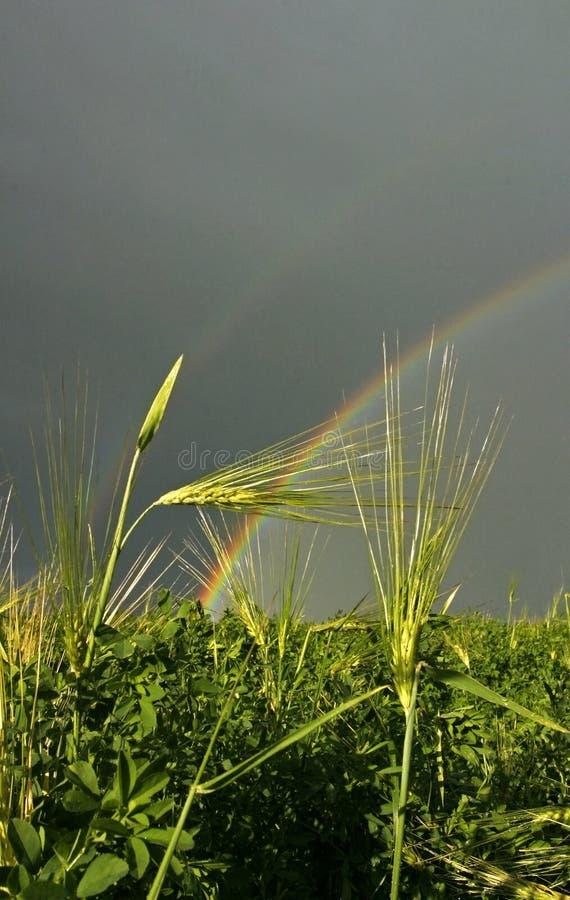 Van de het grasregenboog van het gebied de hemel van het de zomeronweer royalty-vrije stock afbeelding
