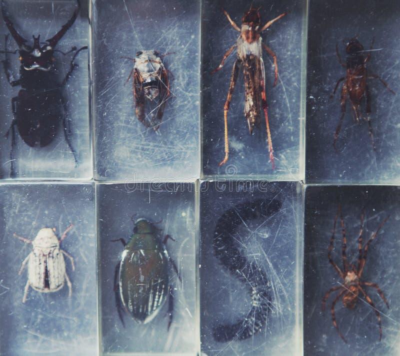 Van de het Insectinzameling van het biologieglas de daglicht stock foto