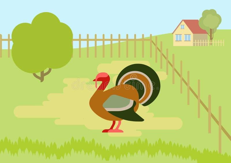 Van de het landbouwbedrijfbinnenplaats van Turkije vogels van het beeldverhaal vectorwilde dieren de vlakke royalty-vrije illustratie
