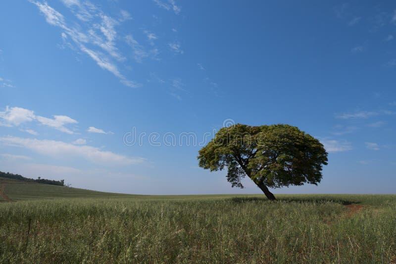 Van de het landschapshemel van de boomhorizon eenzaam de eenzaamheidgebied stock foto