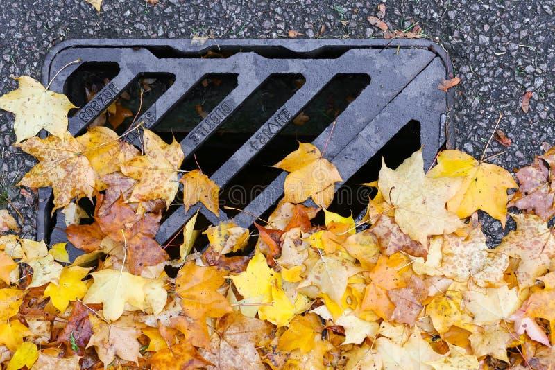 Van de het Metaalgrill van de wegdrainage het Afvoerkanaaldekking met Autumn Maple Leaves royalty-vrije stock afbeelding