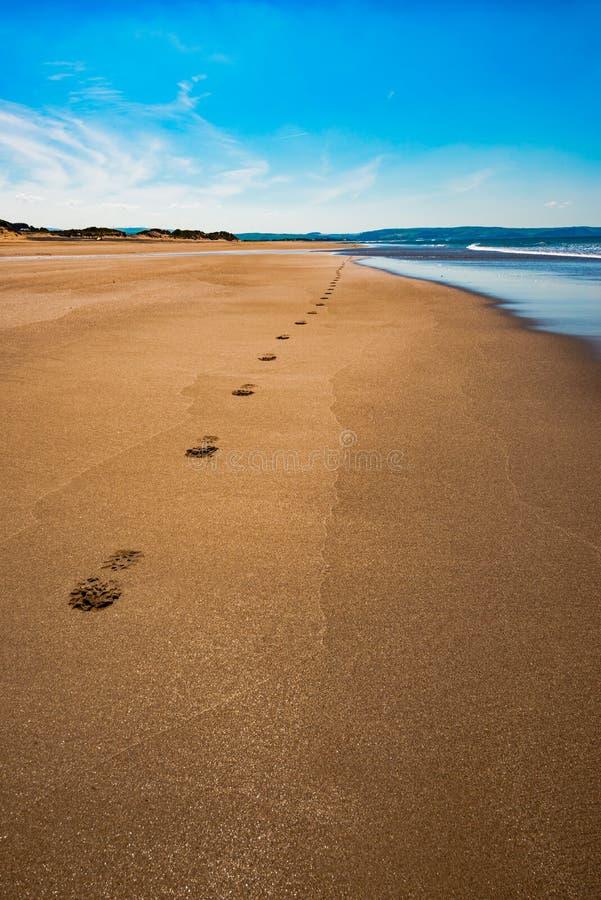 Van de het zeegezichtvakantie van Aberdoveyaberdyfi Wales Snowdonia het UK enorme mooie de bestemmingsvoetafdrukken op het zand n royalty-vrije stock foto