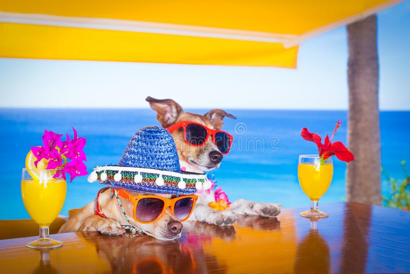 Van de de hondenzomer van de cocktaildrank de vakantievakantie AR de bar royalty-vrije stock afbeelding