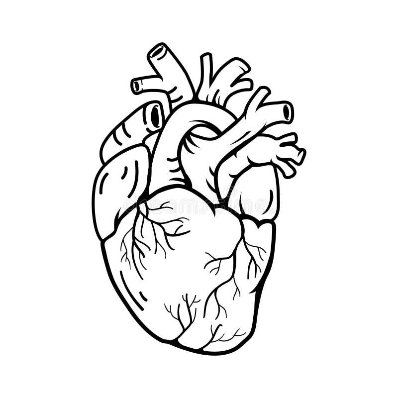 Van de de illustratielijn van de hart echte vorm het symboolstijl vector illustratie