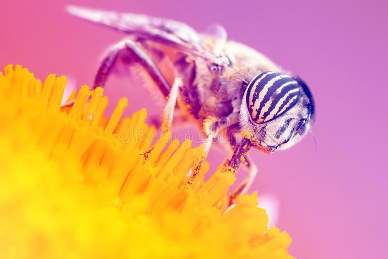 Van de insectbestuiving gele kleur als achtergrond stock foto