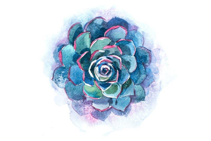 Van de de installatiebloem van het cactus succulente aloë de waterverfillustratie vector illustratie