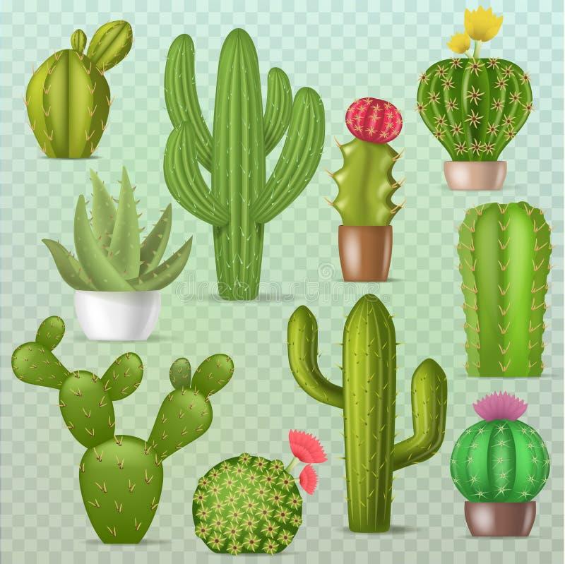 Van de de installatieplantkunde van cactus vector botanische cactussen groene cactusachtige succulente de illustratie bloemen rea royalty-vrije illustratie
