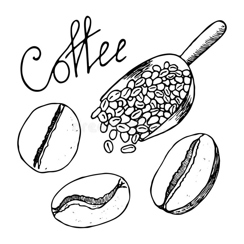 Van de koffiebonen en lepel hoogtepunt van hen Contourhand getrokken schets Vector illustratie die op witte achtergrond wordt geï royalty-vrije illustratie