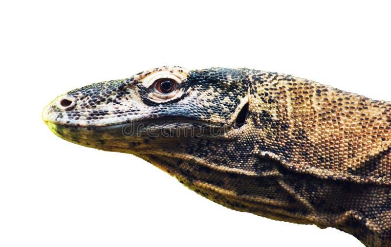 Van de Komododraak (Varanus-komodoensis) het portret op witte backgr royalty-vrije stock foto