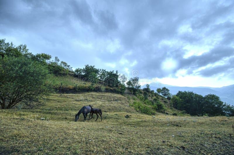Van de moederpaard en baby veulen bij het groene gebied Bergen van Azerbeidzjan caucasus royalty-vrije stock afbeelding
