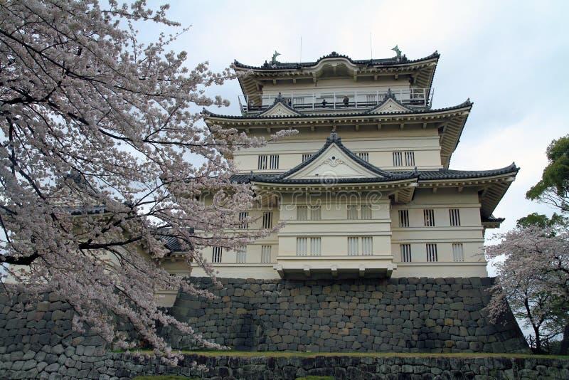 Van de Odawarakasteel en kers bloesems royalty-vrije stock afbeeldingen