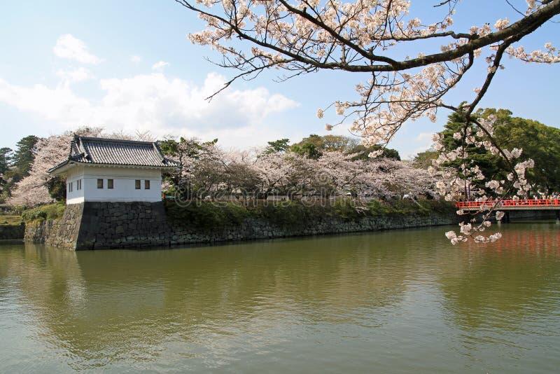 Van de Odawarakasteel en kers bloesems stock fotografie