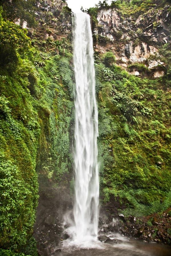 Van de Oost- waterval van Madakaripura Java, Indonesië royalty-vrije stock foto's