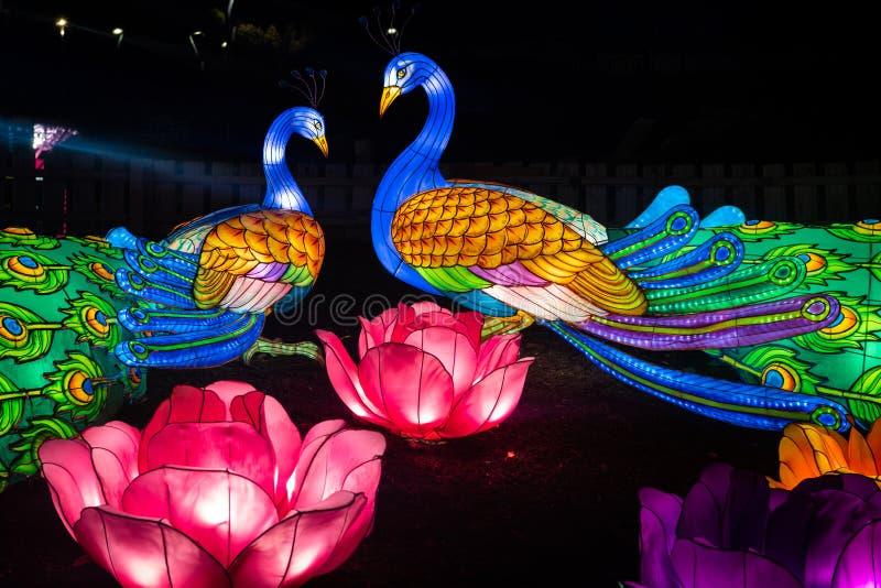 Van de de pauwen toont de Chinese lantaarn van Nice de kleurenpartij stock afbeeldingen