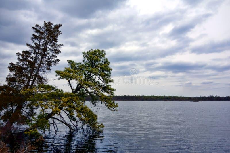 Van de Pijnboombarrens Pinelands van New Jersey de Nationale Reserve royalty-vrije stock foto