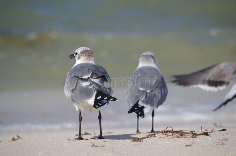 Van de rug: twee vogels stock afbeelding