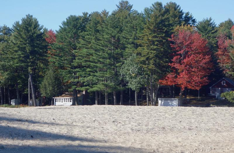 Van de sereniteitsmaine van het dalingsgebladerte van het de herfst zandige strand heldere rode de bladeren donkergroene bomen stock foto