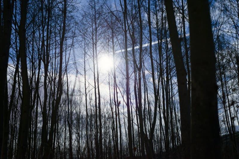 Van de struikenbomen van de nacht de bosvolle maan verschrikking van de de fantasiescène heldere royalty-vrije stock afbeeldingen