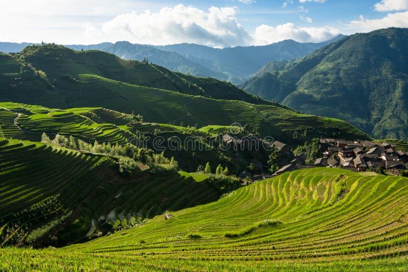 Van de terrassenguilin van de Longshengrijst het landschap van China stock afbeelding