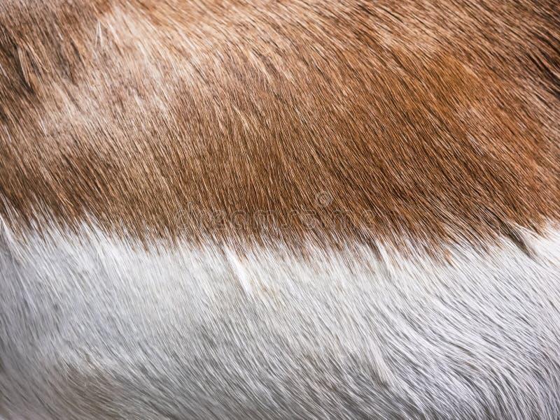 Van de de textuurhuid van het vos Bruine bont Dierlijke de Aardachtergrond stock foto