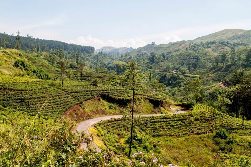Van de de theeaanplanting van Sri Lanka de bergweg royalty-vrije stock afbeelding